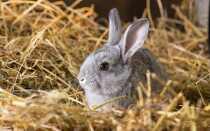 Сено для кроликов