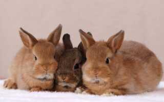 Уход и содержание декоративных кроликов