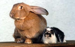 Маленькие и большие кролики в мире