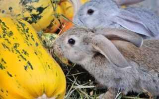 Можно ли давать кроликам тыкву