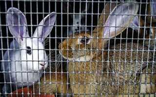 Промышленные клетки для содержания и выращивания кроликов