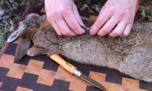 Как разделать кролика и забой
