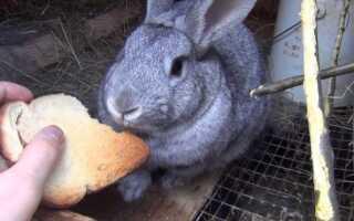 Можно ли кормить кроликов хлебом