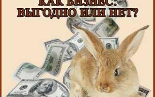 Разведение кроликов как бизнес: выгодно или нет