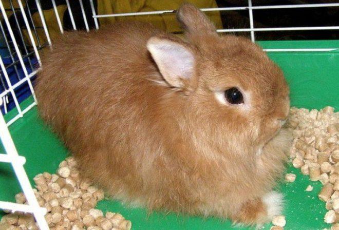 Клетка для лисьего кролика