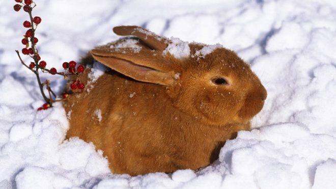 Кролик в снегу