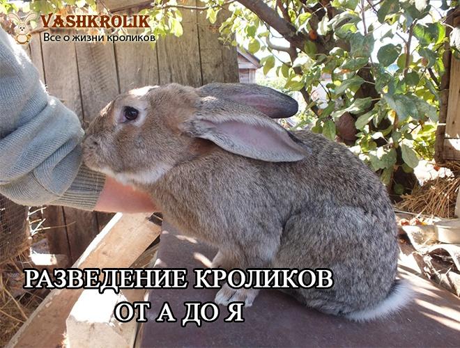 Кролиководство в России