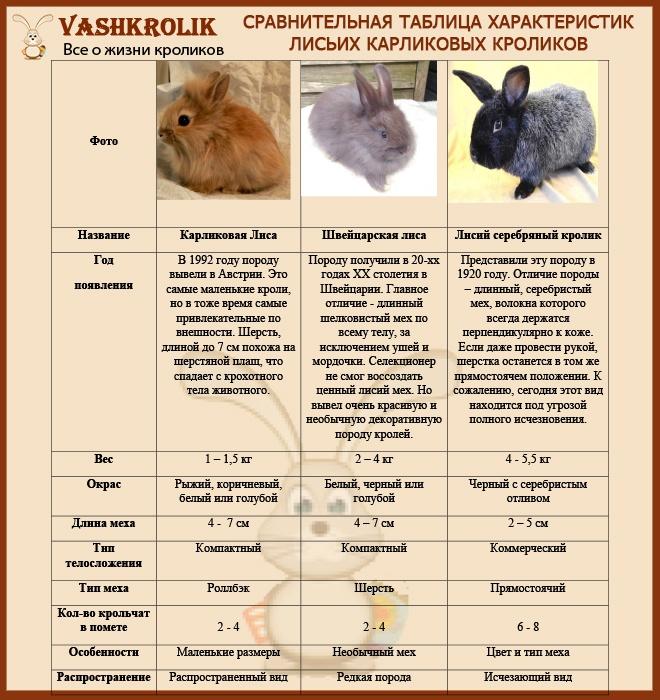 Породы лисих кроликов