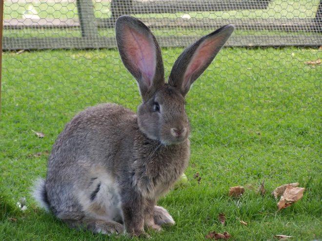 Кролик на лужайке