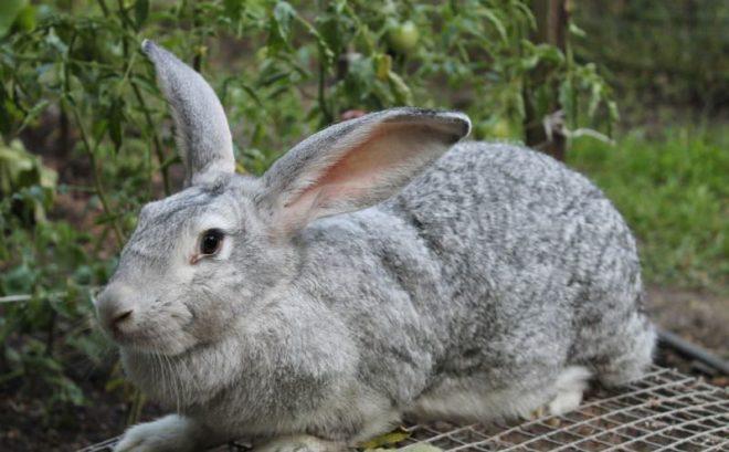 Кролик сидит на клетке