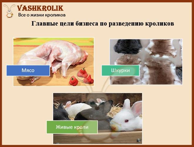 Цели кроличьего бизнеса