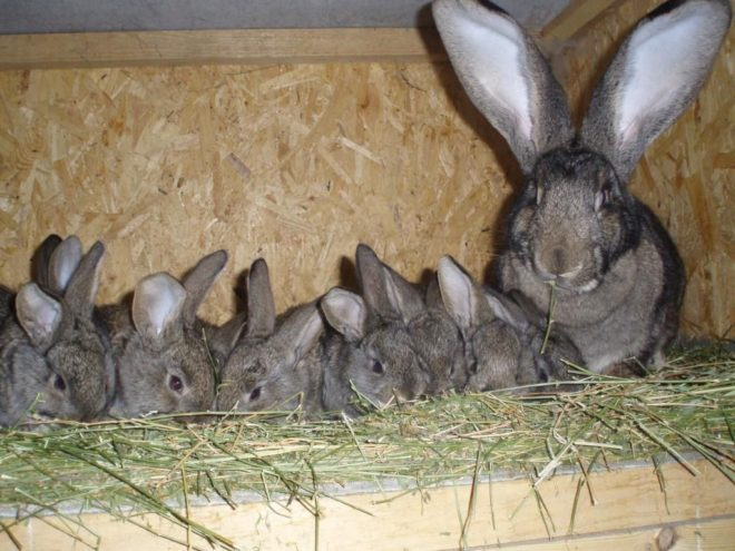 Родилка для кролихи