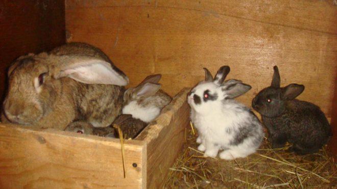 Кролики в гнезде