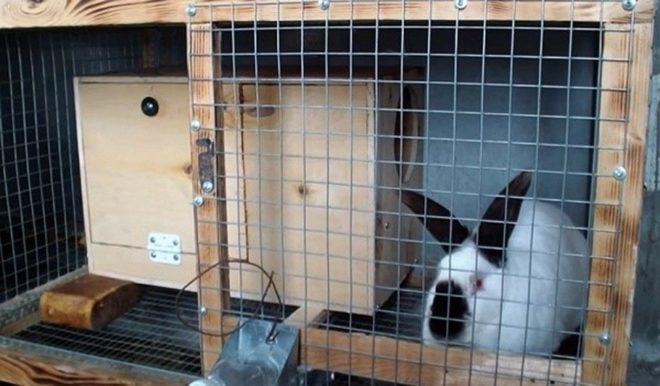 Клетка для разведения кроликов