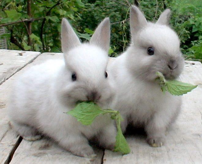 Крольчата кушают