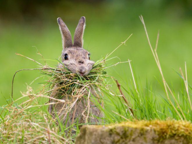 Сбалансированный рацион кролика