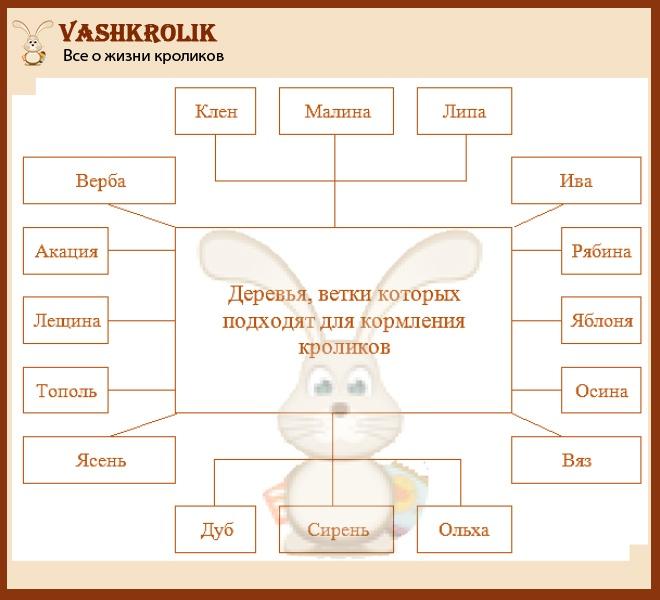 Ветки для кролей