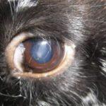 Помутнение глаз
