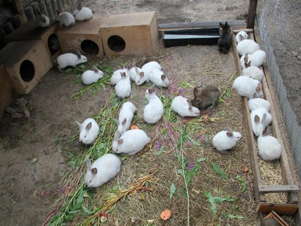 Кролики разводятся на полу