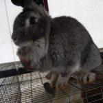 Опухоль на теле кролика