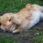 Солнечный удар у кролика