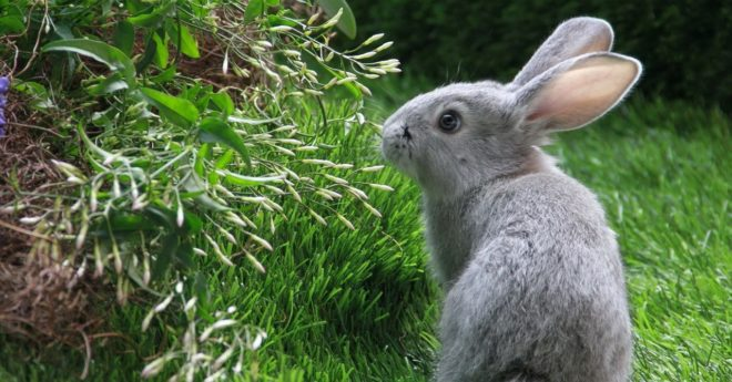 Кролик на газоне