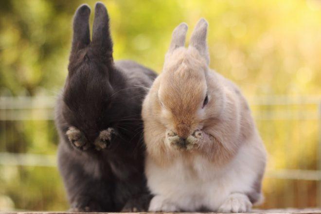 Кролики лапки