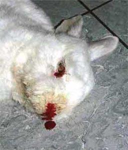 ВГБ у кроликов