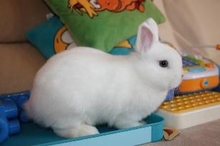 Породы кроликов с фотографиями и названиями