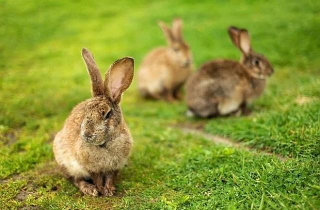 Кролики на лугу