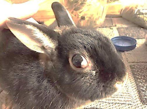 Слезятся глаза у кролика причина