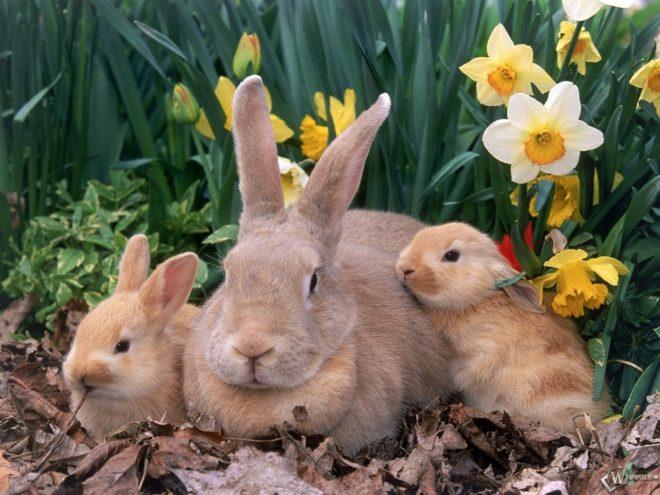 Крольчата с мамой