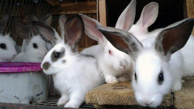Кролики малыши