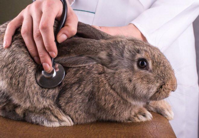 Кролики болеют