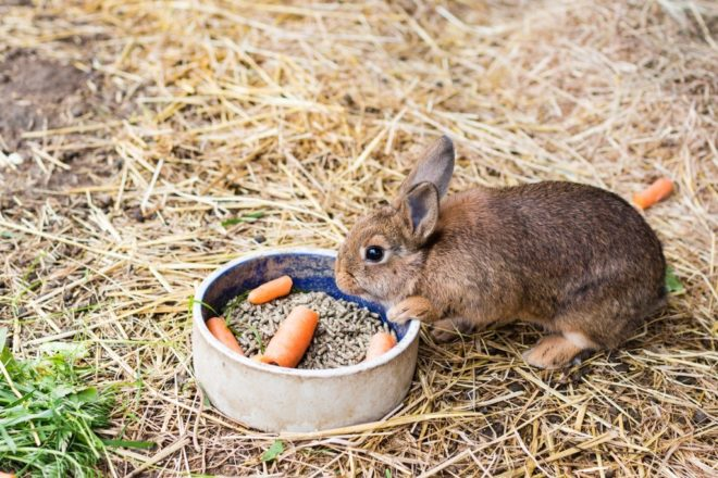 Кролик на откорм