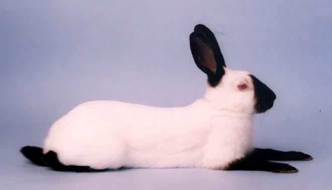 Породы кролей