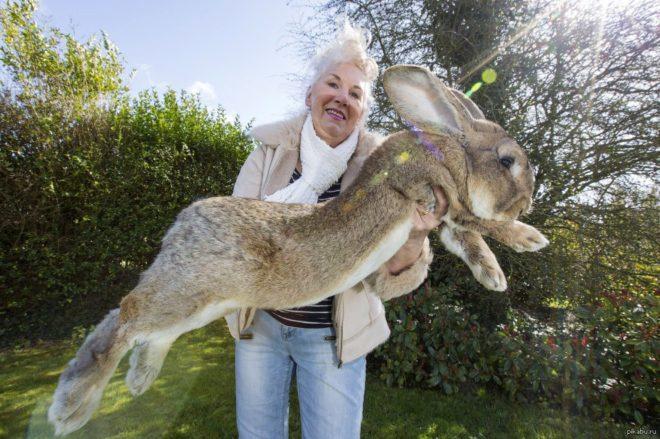 Кролик рекордсмен