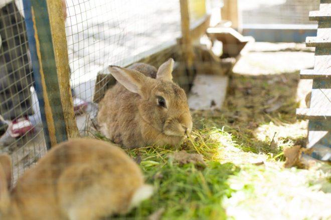 Растим кроликов дома
