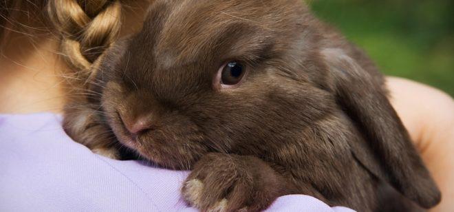 Пастерелез у кролика