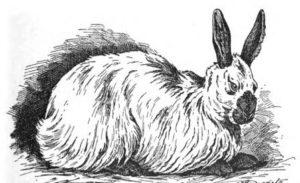 Russisches ангора-Kaninchen