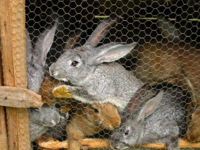 Особенности кроличьего навоза