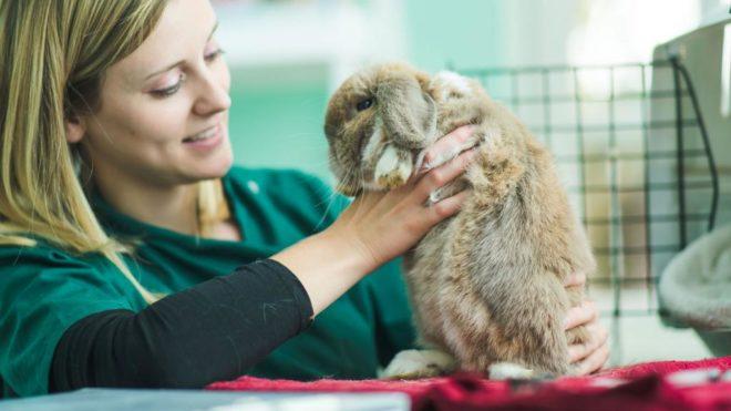 Осмотр кролика у ветеринара