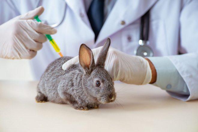 Как прививать кролика
