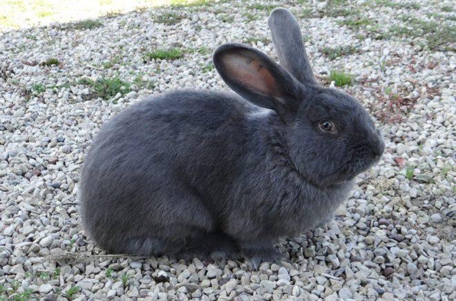 Кролик на камушках