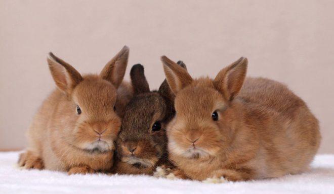Маленькие декоративные крольчата