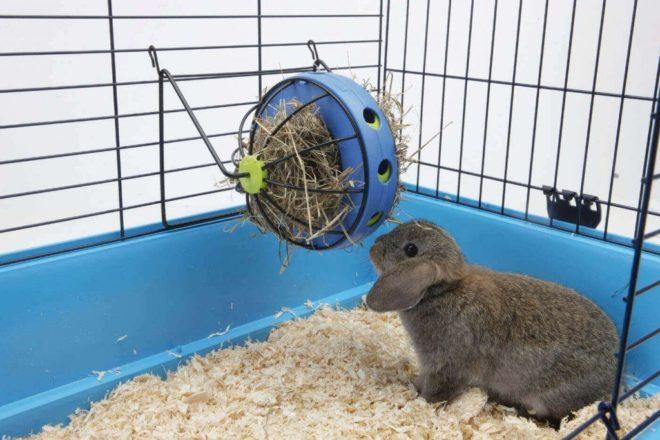 Кролик сидит в клетке и ест сено