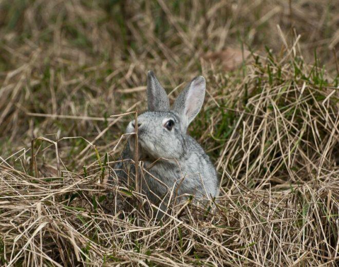 Кролик ест сено