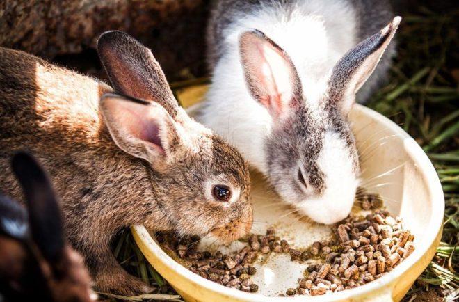 Кролик ест гранулы