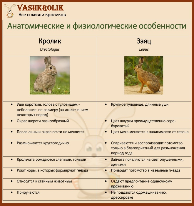 Различия зайца и кролика