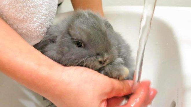 Крольчонка моют в раковине